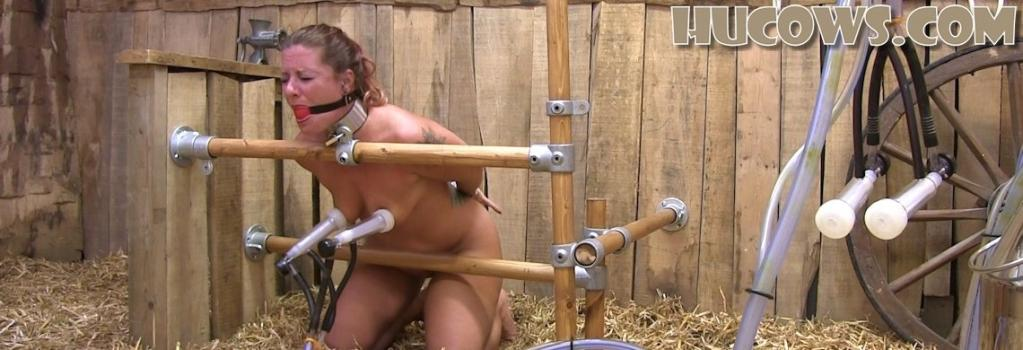 Hucows.com- Fayth - first milking session