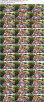 159832865_blakeblossomcollection_-ftvgirls-com-_blake_ftv-s_new_covergirl_2_2020_sc_3_s.jpg
